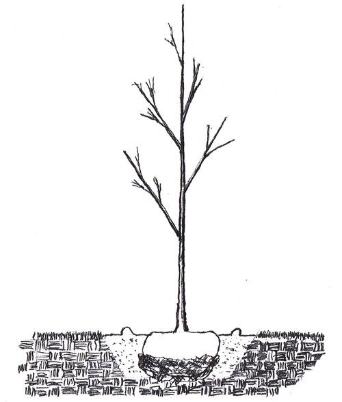 plantingcare