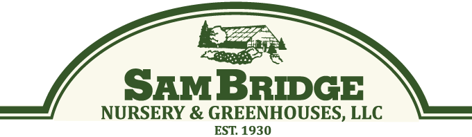 Sam Bridge