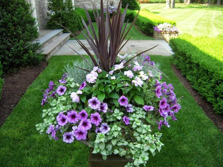 at home design center greenwich ct with Bos Container Plantings on Sponsors Of Garden education center Greenwich ct additionally Id F 853519 in addition bos Container Plantings moreover Id F 602530 furthermore Id F 703615.